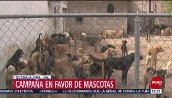 Foto: Bomberos de Guadalajara lanzan campaña para evitar mascotas en la azotea