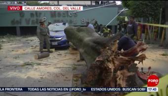 Foto: Cae árbol sobre automóviles en la colonia Del Valle
