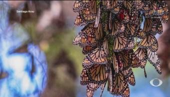 Foto: Fotografías Mariposa Monarca Santuario 1 de Marzo 2019