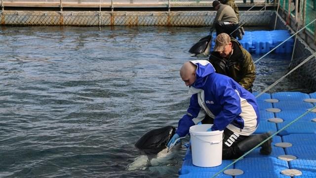 FOTO Cárcel de ballenas en Rusia podría cerrar pronto (WDC 2019)