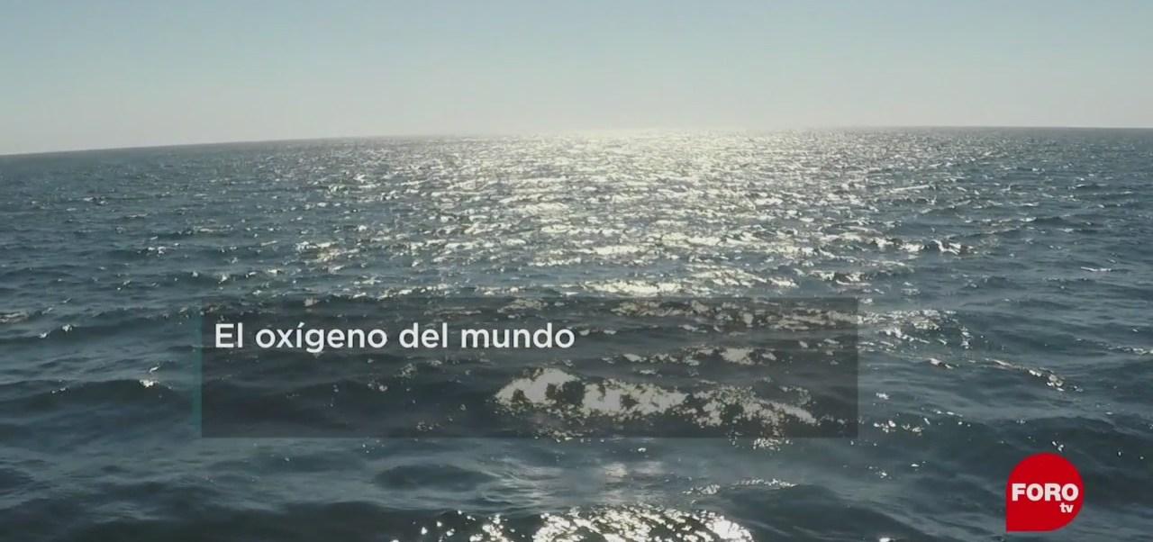 FOTO: Científicos de la UNAM estudian la salud de los océanos, 3 marzo 2019