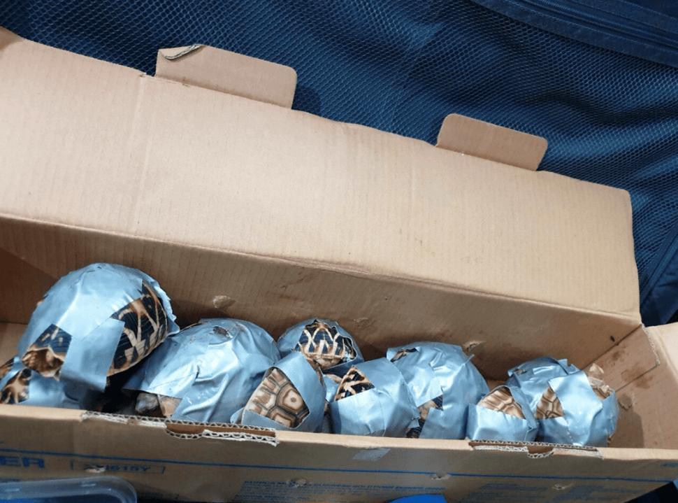 Foto: Tortugas decomisadas en Manila, Filipinas, 4 de marzo de 2019, Filipinas