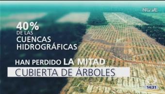 Foto: Devastación de bosques en México