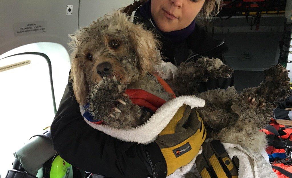 Video: Helicóptero rescata a perro perdido en montañas