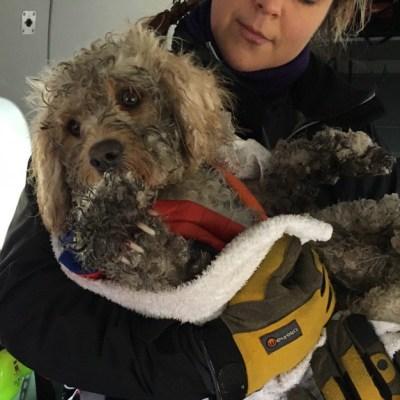 Video: Helicóptero rescata a perro perdido en montañas nevadas