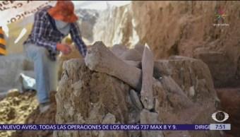Encuentran restos de otro mamut en Tultepec