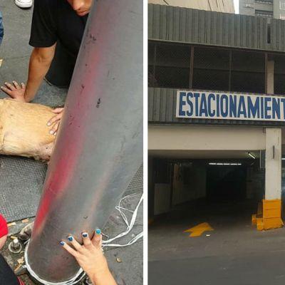 Lanzaron a dos perros desde el techo de un estacionamiento y ahora la policía los busca