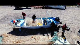 Foto: 'Refrito', estrategia de AMLO para proteger vaquita marina 22 marzo 2019