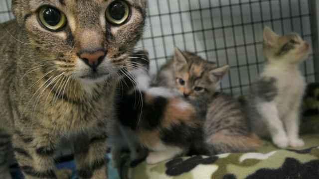 EU alimenta gatos muertos a saludables en experimentos