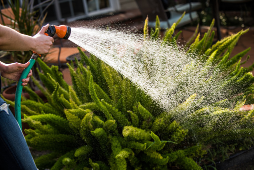 fot regar plantas agua