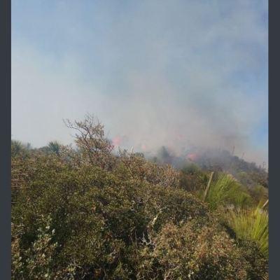 Controlan dos incendios forestales en Tamaulipas; uno más sigue activo