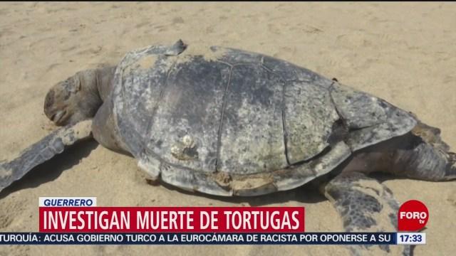 Foto: Investigan muerte de tortugas en Guerrero