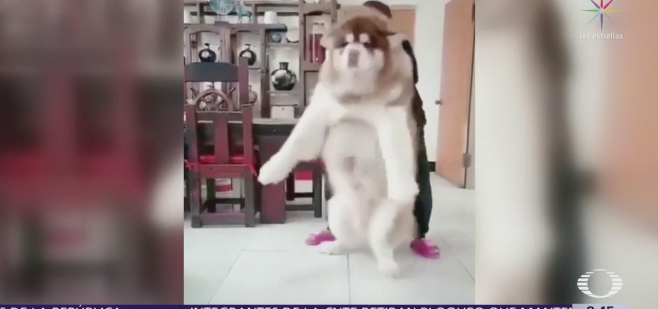 Mujer hace viral el crecimiento de su perro