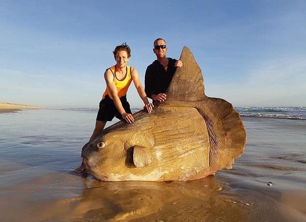 foto Encuentran pez luna gigante ahora en Australia 20 marzo 2019