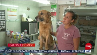 FOTO: Rehabilitan a 'Capitán' el perro aventado de un edificio en CDMX, 17 marzo 2019