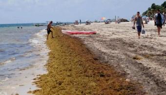 Foto: Sargazo en playas de Quintana Roo, 7 de marzo 2019. Cuartoscuro