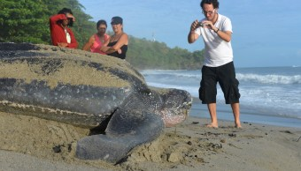 Tortuga-laud-rescate-animal-pescadores-Sinaloa