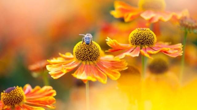 Prohíben agredir a las abejas en municipio mixteco de Oaxaca