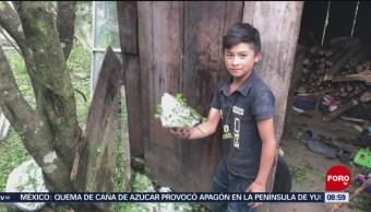 FOTO: Al menos 200 casas dañadas por granizada en Veracruz, 7 de abril 2019