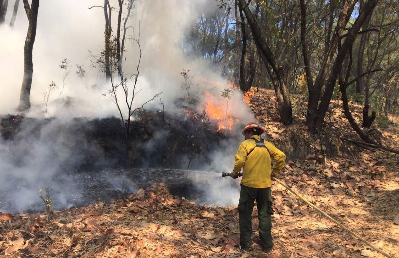 Sofocan otros tres incendios en el Bosque de la Primavera
