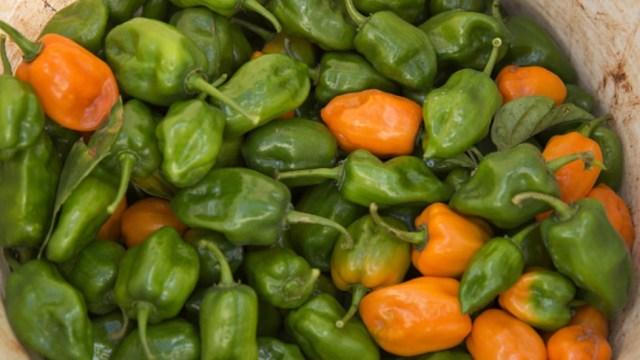 Foto: En Campeche se producen más de dos mil toneladas de chile habanero al año, considerado el más picante a nivel mundial, abril 7 de 2019 (Getty Images)
