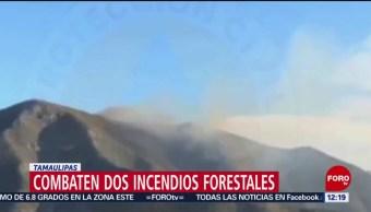 Combaten dos incendios forestales activos en Tamaulipas