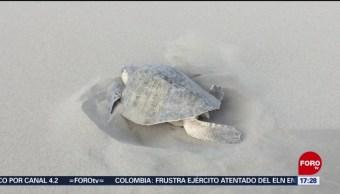 FOTO: Crean corrales para preservar a la tortuga marina en Chiapas, 21 ABRIL 2019