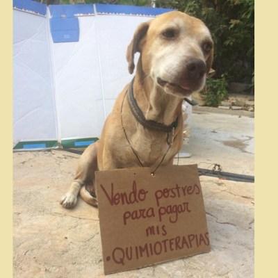 Él es 'Deko', el perrito que vende postres para pagar sus quimioterapias