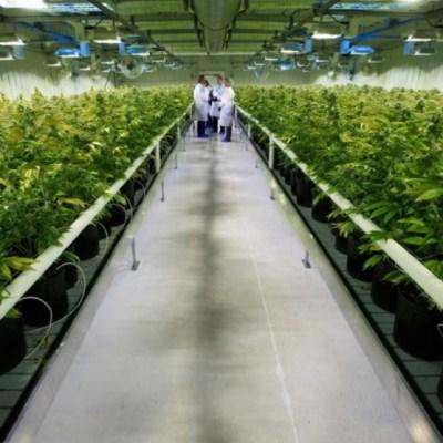 Tabaco contra marihuana: lo que dice la ciencia