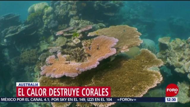 El calor afecta recuperación de corales en Australia, advierten científicos