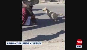 Extra, Extra: Perro defiende a Jesús