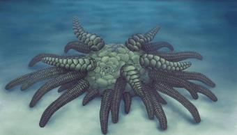 """Foto Descubren fósil de """"Cthulhu"""" marino con 45 tentáculos blindados 11 abril 2019"""