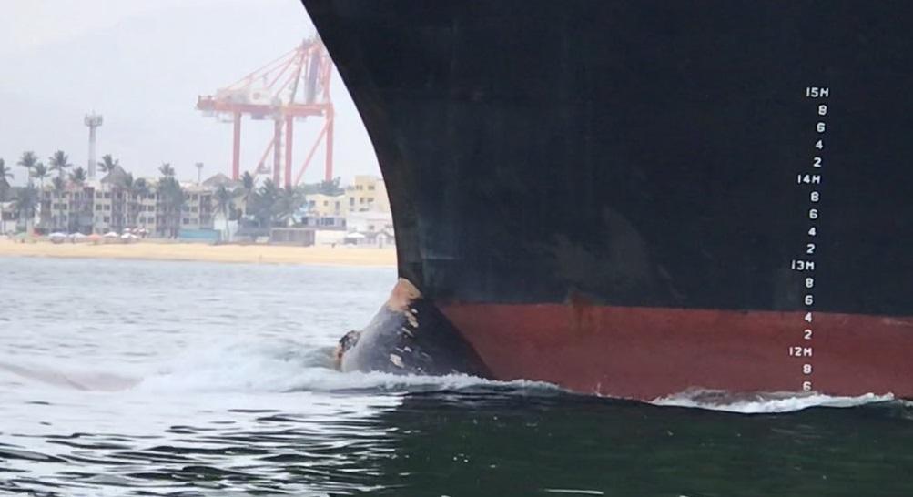 Foto: Una ballena azul quedó atorada en la punta de un barco portacontenedores. El 24 de abril de 2019