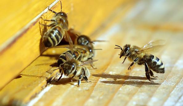 Imparten taller de apicultura en escuela de Oaxaca