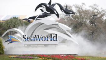 Muere una ballena piloto en SeaWorld