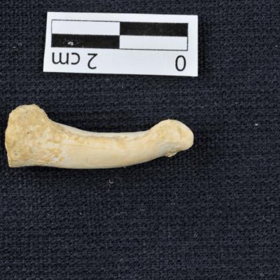 Fósiles hallados en Filipinas corresponderían a nueva especie humana