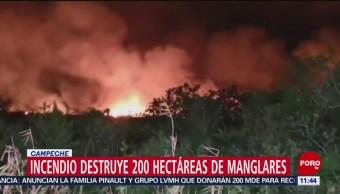 Incendio destruye 200 hectáreas de manglares en Campeche