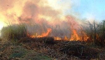 """Foto: La Comisión Nacional Forestal en Quintana Roo reporta dos incendios forestales que consumen los ejidos en """"Nor Tabasco"""" y """"Río Verde"""" en Bacalar, abril 7 de 2019 (lucesdelsiglo)"""