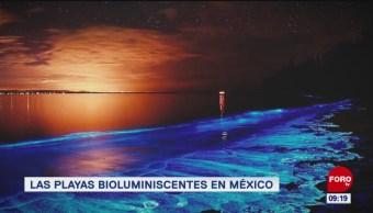 Las playas bioluminiscentes en México