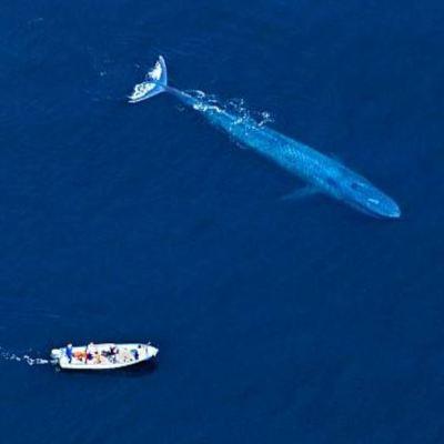 Las ballenas, gigantes que habitan en la inmensidad del mar