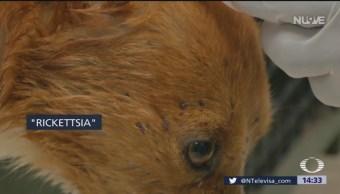 Foto: Mueren cuatro personas por casos de rickettsia en Chihuahua