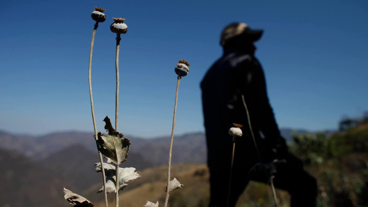 FOTO Narcos convierten a niños en esclavos, en plantíos de droga (AP 27 enero 2015)