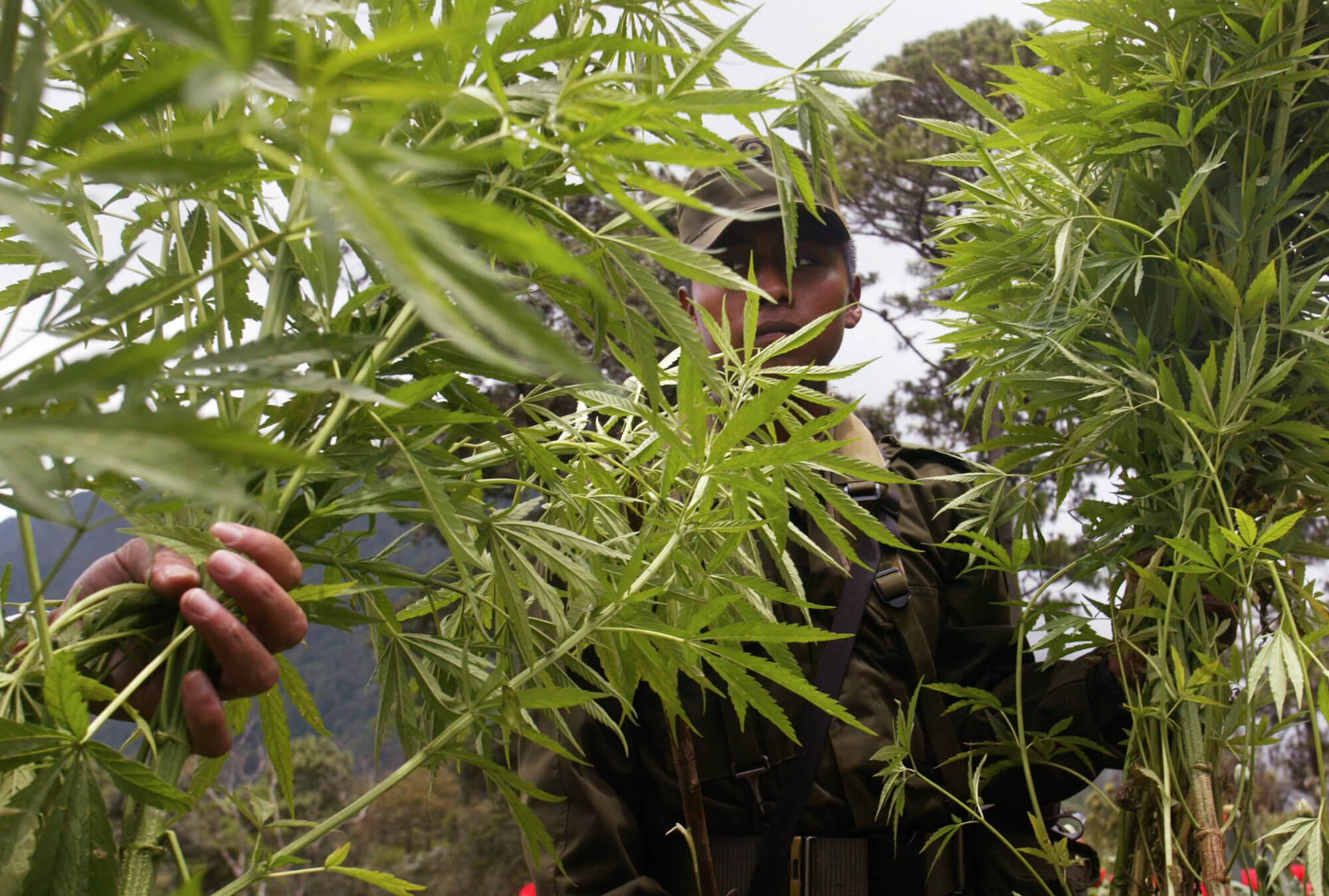 FOTO Narcos convierten a niños en esclavos, en plantíos de droga (AP 27 ago 2002)