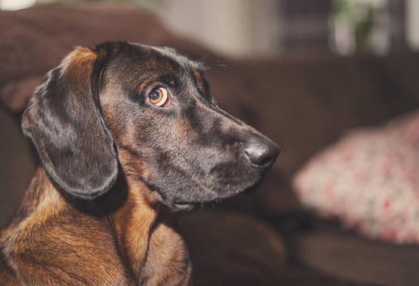 ¿Es posible que los perros detecten espíritus y a las personas con mala vibra?