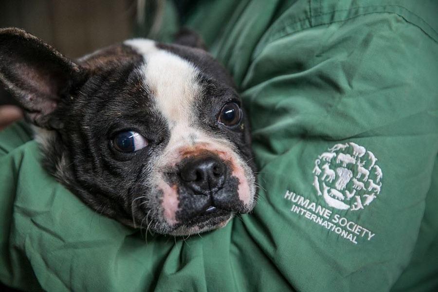 Foto Salvan a perros de ser comidos en festival, ahora buscan hogar 11 abril 2019