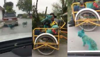 """Foto Pintar perros de verde, la nueva """"moda"""" municipio Nuevo León 4 abril 2019"""