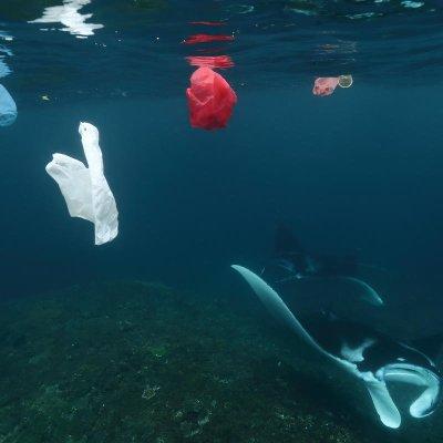 Cantidad de plástico en el océano creció exponencialmente desde el 2000