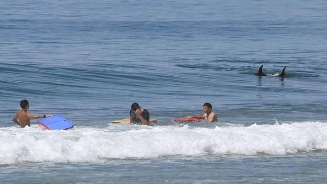 Desalojan a bañistas por tiburón y ballenas en Playa Hermosa, en Ensenada