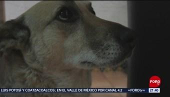 Foto: Qué Hacer Con Mascota En Caso Incendio 23 de Abril 2019