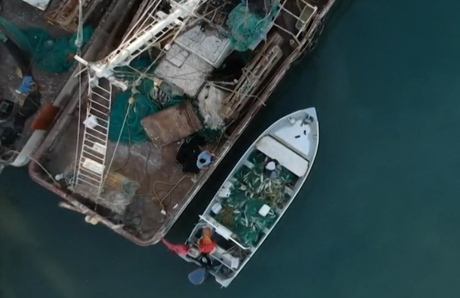 Captura de ilegal de la totoaba divide a San Felipe, BC